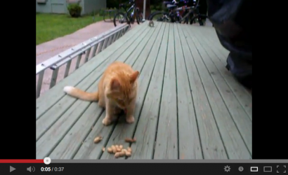 Video Gatitos
